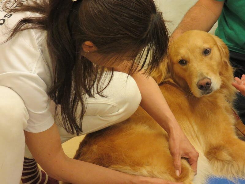 ウチのわんこを癒したい!!犬の整体をやってみよう!