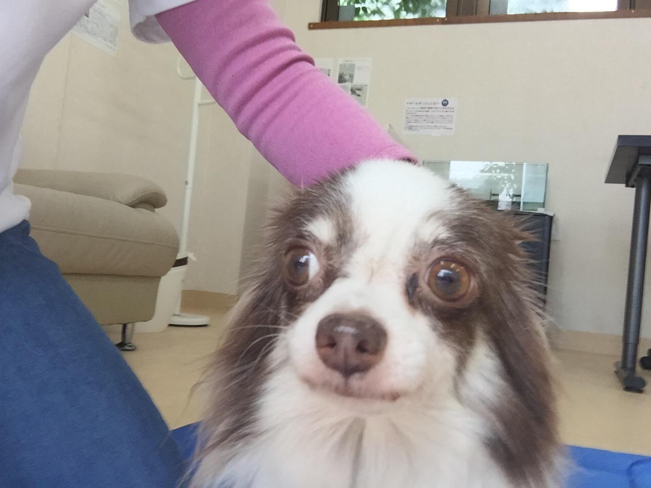 心の癒し セラピー犬