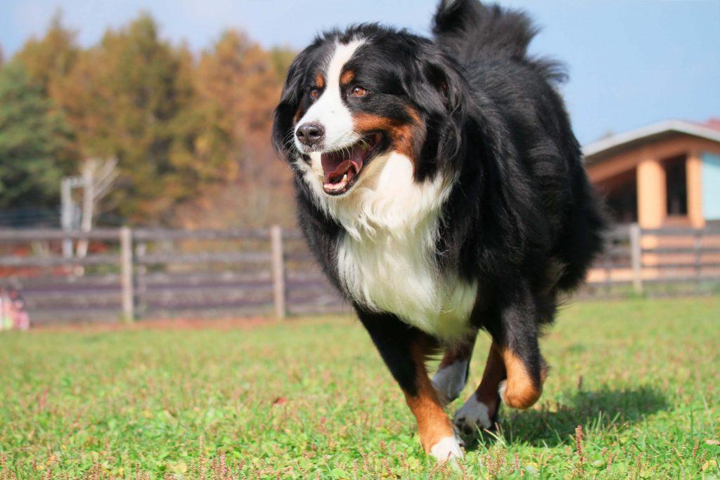 9月 愛犬への整体セルフケアー体験イベント