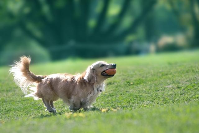 神奈川のドッグマッサージ・整体は「犬の整体とマッサージ専門店 Ola Ola(オラオラ)」!ヘルニア・老犬のリハビリもお任せ!