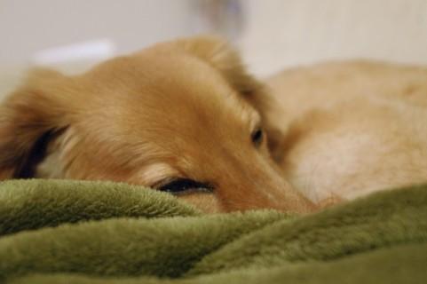 老犬の心のケアにドッグマッサージを!癒しの時間を愛犬に