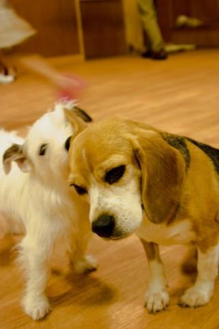 愛犬の癒しになるドッグマッサージは「犬の整体とマッサージ専門店 Ola Ola(オラオラ)」にお任せ!