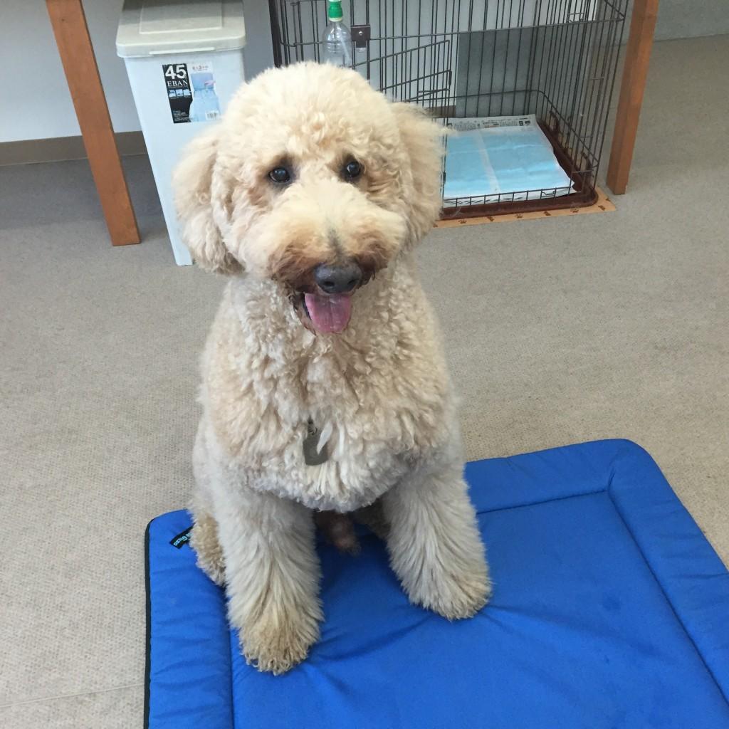 セラピー協会のセラピー犬