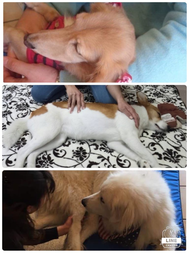 犬の整体 体験イベントのお知らせ