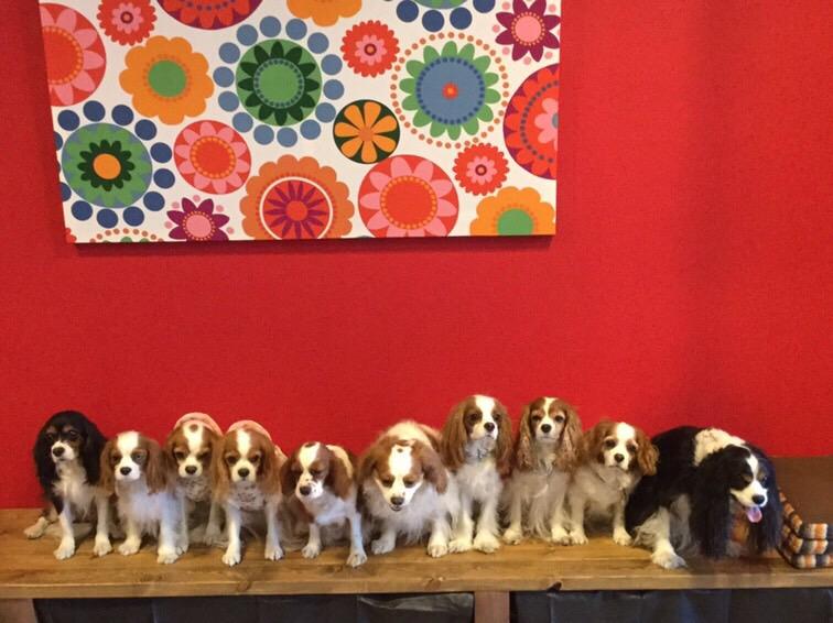 犬の整体体験イベント グループ参加の様子